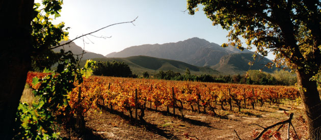 South Africa - Cape Winelands