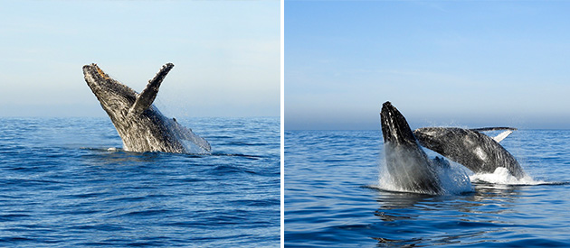 Ocean Odyssey. Permitted close encounter boat-based whale watching. Dolphin watching tours. SUP sales, rentals in Knysna, Garden Route, South Africa